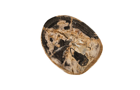 Phillips Collection - Petrified Wood Stool - ID74185