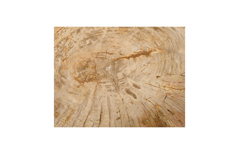 Phillips Collection - Petrified Wood Stool - ID76221