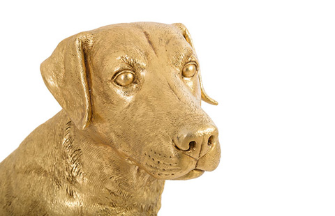 Phillips Collection - Labrador Dog - PH76407