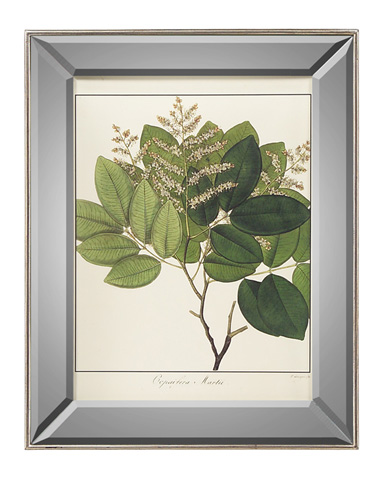 John Richard Collection - Copaifera Martii - GRF-5404C