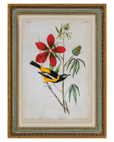 John Richard Collection - Audubon Bird & Botanical I - GRF-5567A