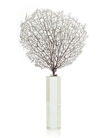 John Richard Collection - Natural Sea Fan with Glass Base - JRA-8958