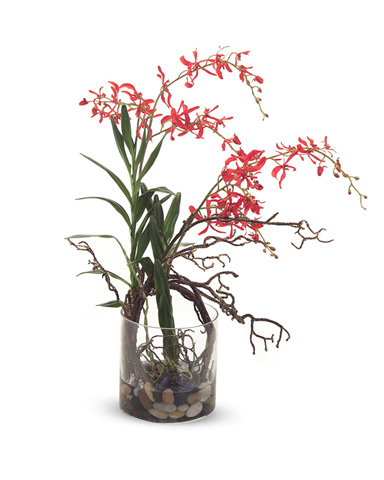 John Richard Collection - Red Spider Orchid - JRB-2852W