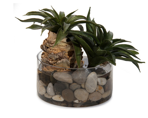 John Richard Collection - Star Succulents - JRB-3381W