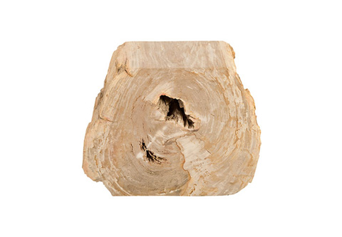 Phillips Collection - Petrified Wood Stool - ID73981