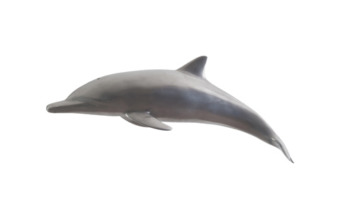 Phillips Collection - Dolphin - PH64554