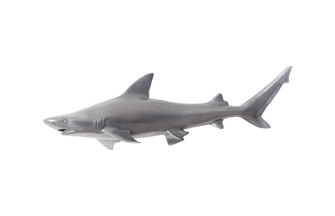 Phillips Collection - Black Tip Reef Shark - PH65284