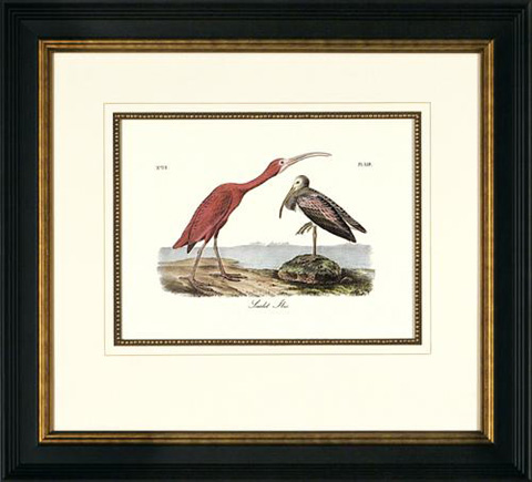 The Picture Source - Scarlet Ibis - A050D