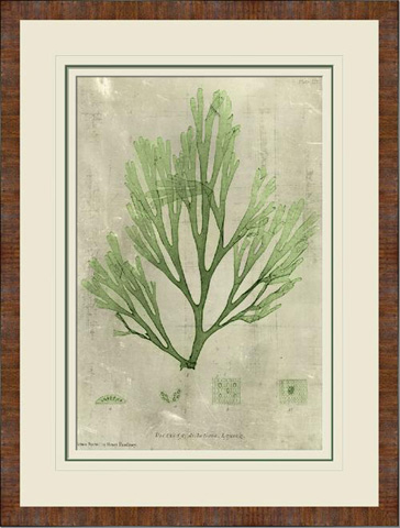 The Picture Source - Emerald Seaweed I - A117A