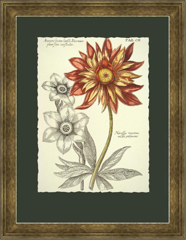 The Picture Source - Tinted Floral III - B104B