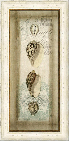 The Picture Source - Cartouche & Shells I - CWG101A