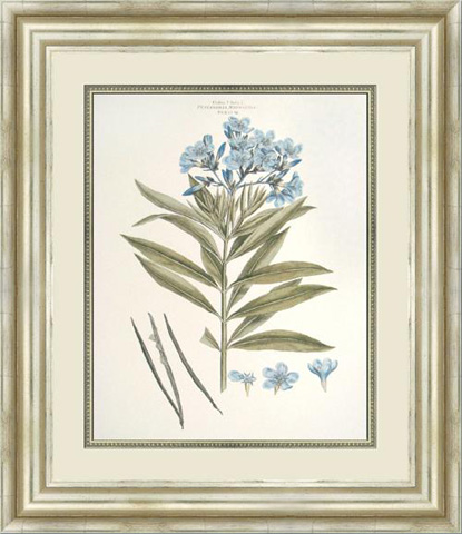 The Picture Source - Bashful Blue Floral III - M210C