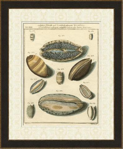 The Picture Source - Porcellaine Shells II - U043B