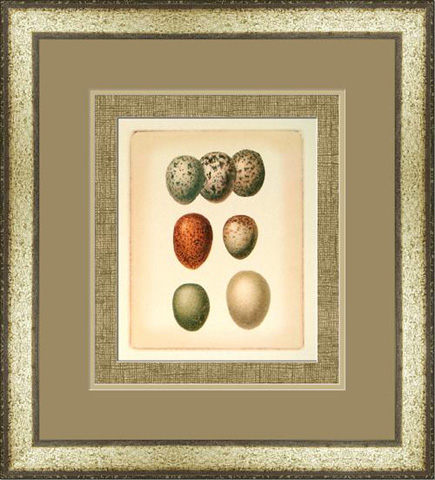 The Picture Source - Bird Egg Study I - U187A
