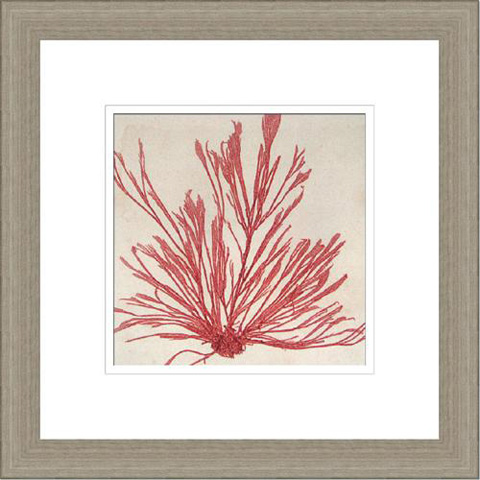 The Picture Source - Brilliant Seaweed IX - V045C