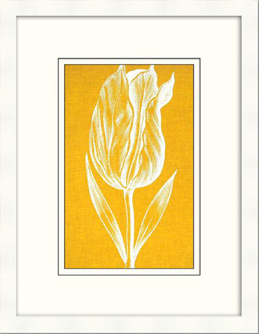 The Picture Source - Chromatic Tulips IV - V122C