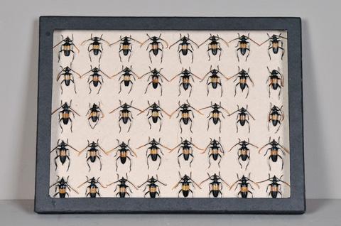 Sarreid Ltd. - Black Collection Box Beetles - 29427