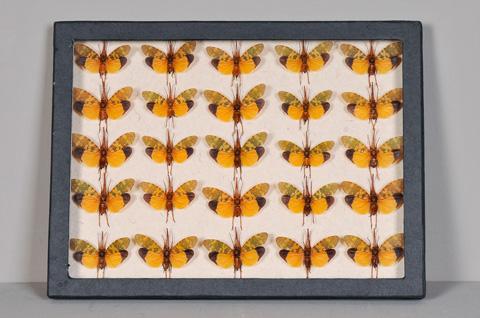 Sarreid Ltd. - Black Collection Box Butterflies - 29428