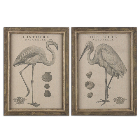 Uttermost Company - Natural History Wall Art - 51077