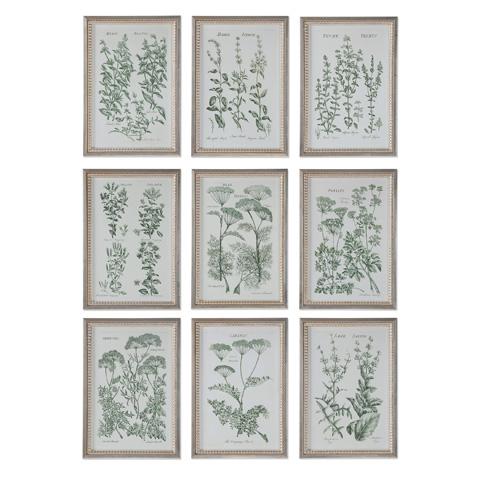 Uttermost Company - Herb Garden Art-Set of Nine - 33625